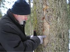 樹の健康状態、森の害虫について語るマエストロ ルカ プ リモン