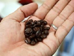 サントス産コーヒー豆